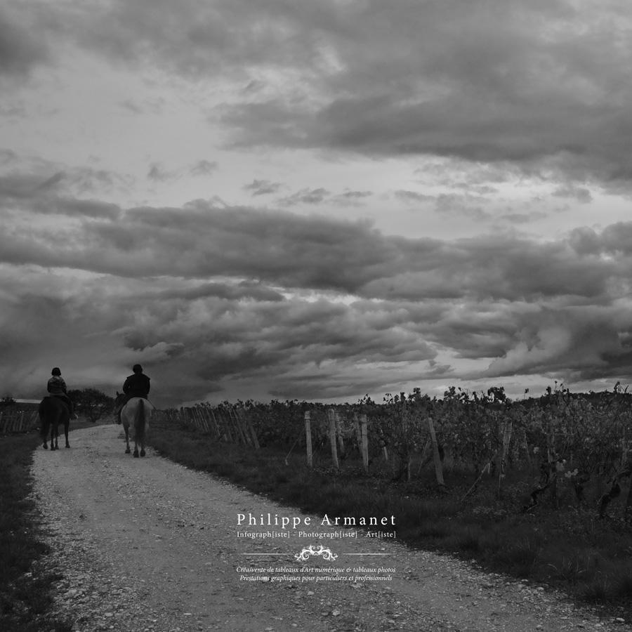 Photo noir et blanc vignes de viré clessé