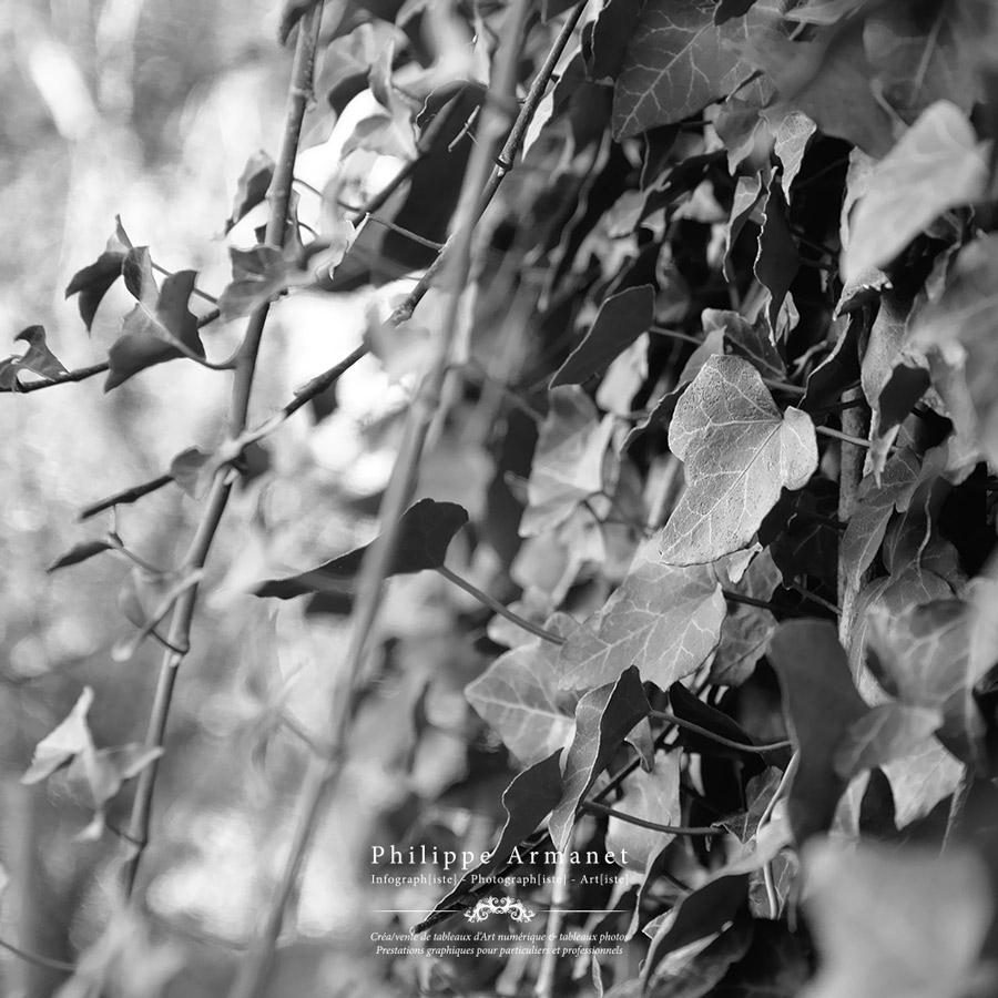 Photo de Philippe Armanet
