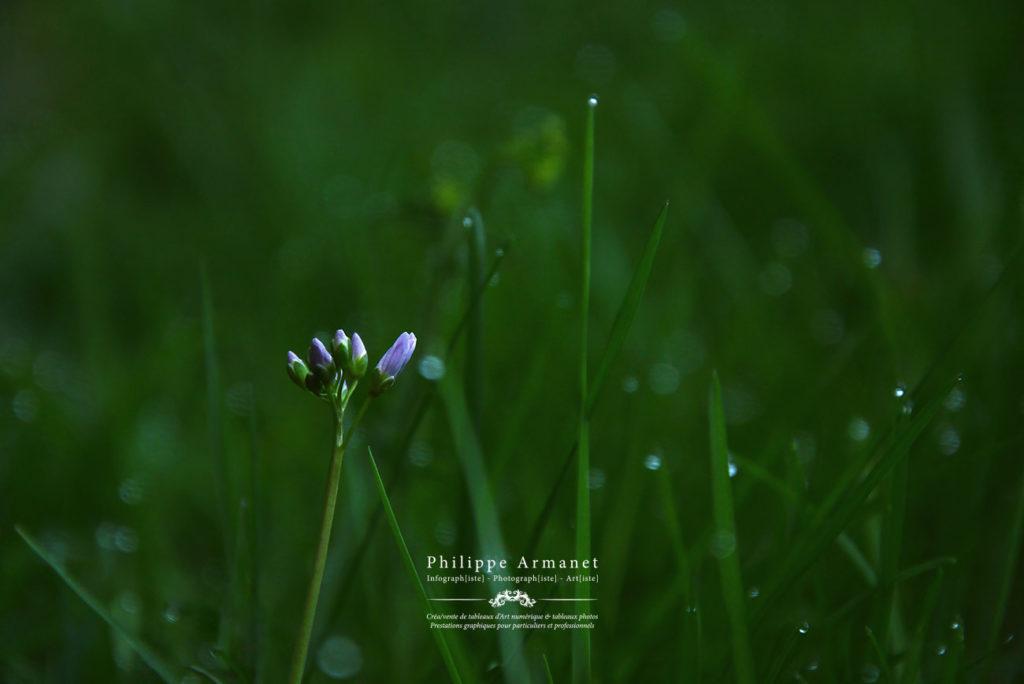 Photo de nature en Saone et Loire