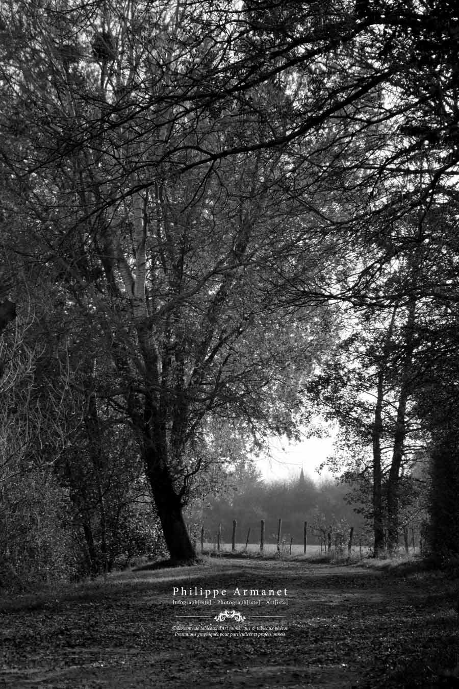 Photographie numérotée en noir et blanc, Philippe Armanet