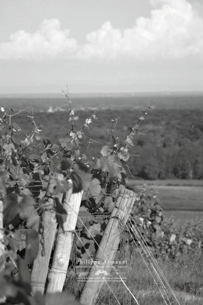 Photographie des vignes de Buxy en côte Chalonnaise. Tous droits réservés : Philippe Armanet.