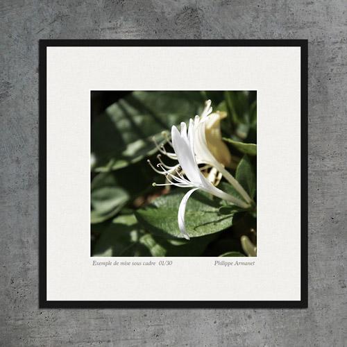 Photo décorative de fleur