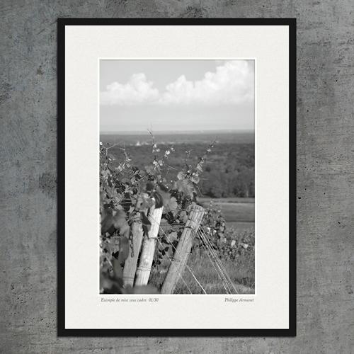 Photo de vignes encadré